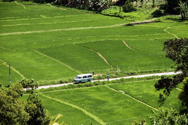 Rice Bus