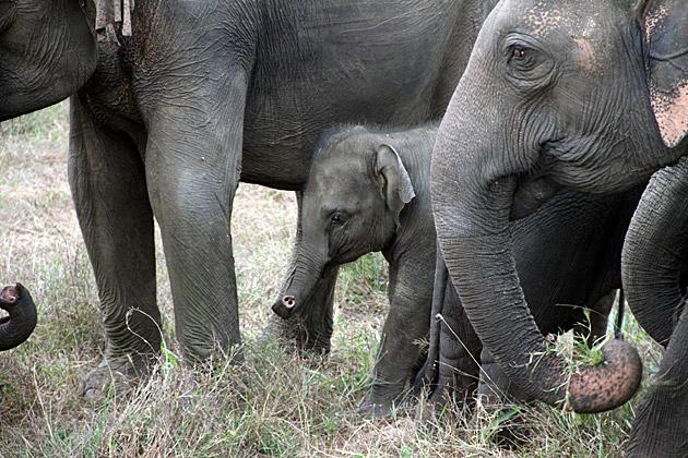 Haberana-Elephant-Baby