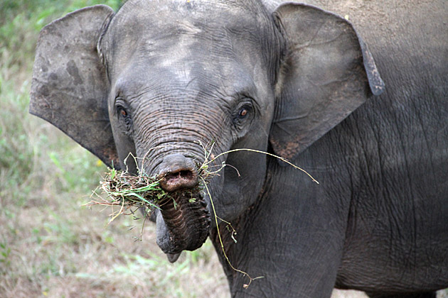 Hungry Elephant Baby
